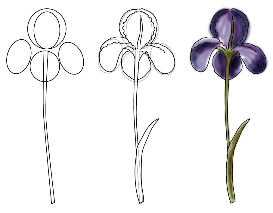 disegnare iris