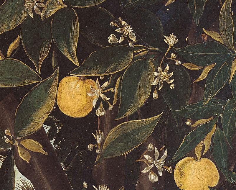 zagara nella Primavera di Botticelli