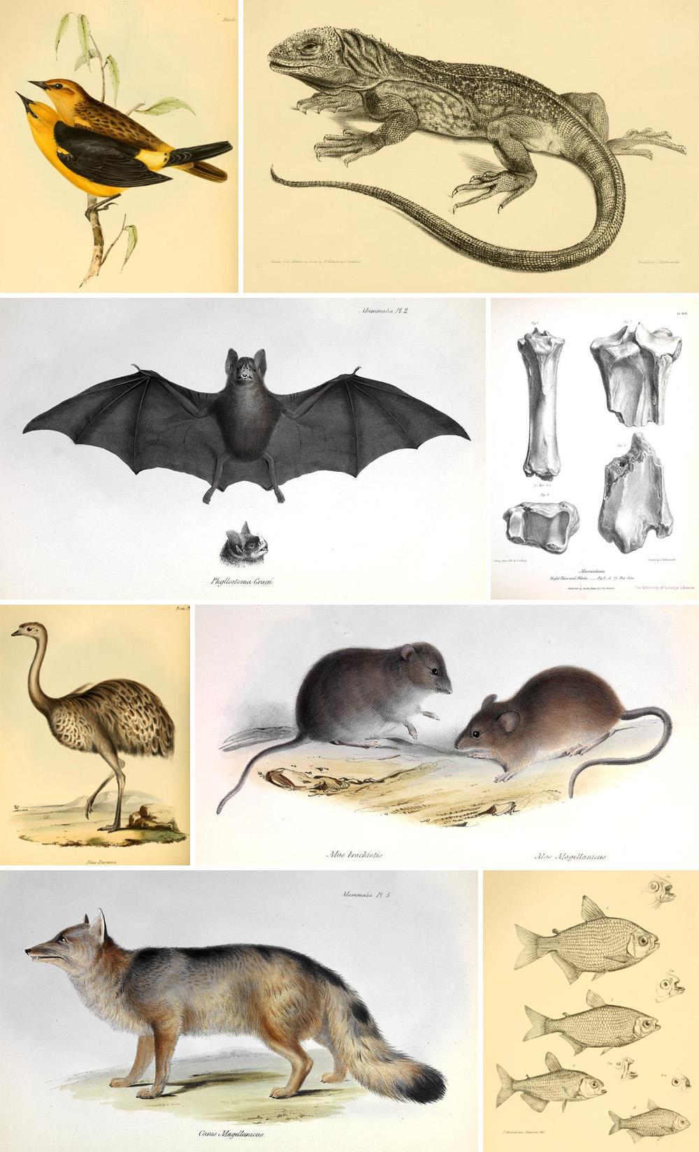 animali nella zoologia di Darwin