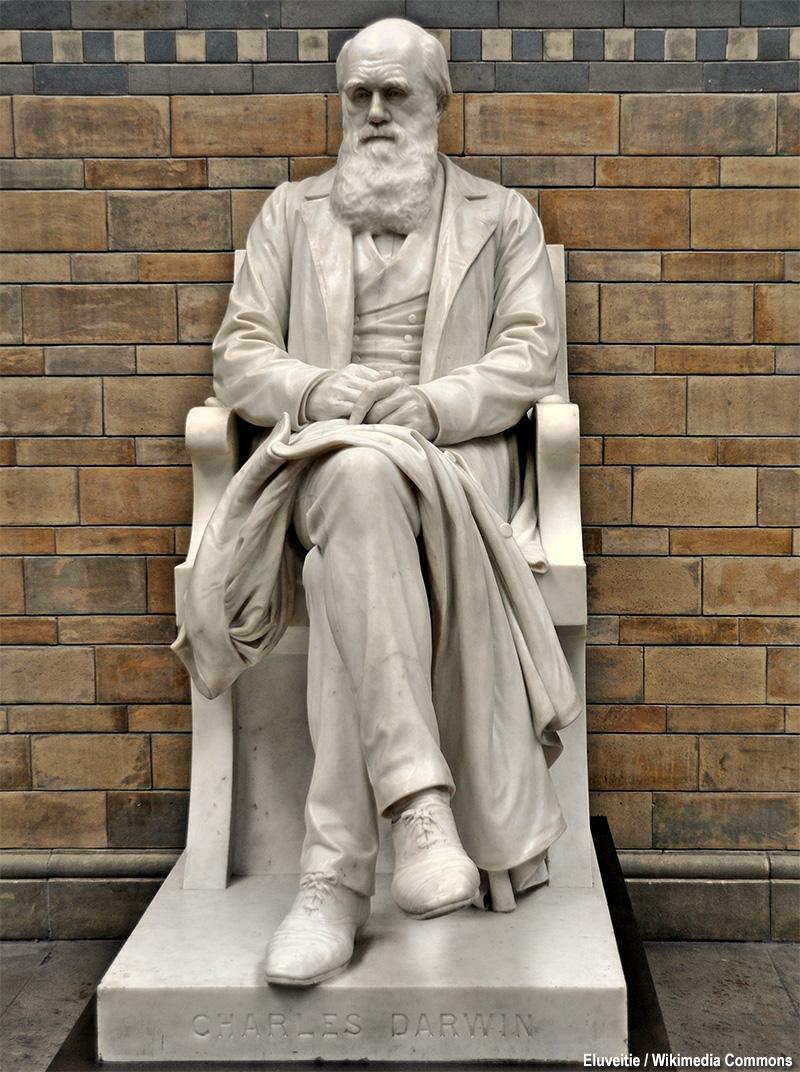 statua di Darwin