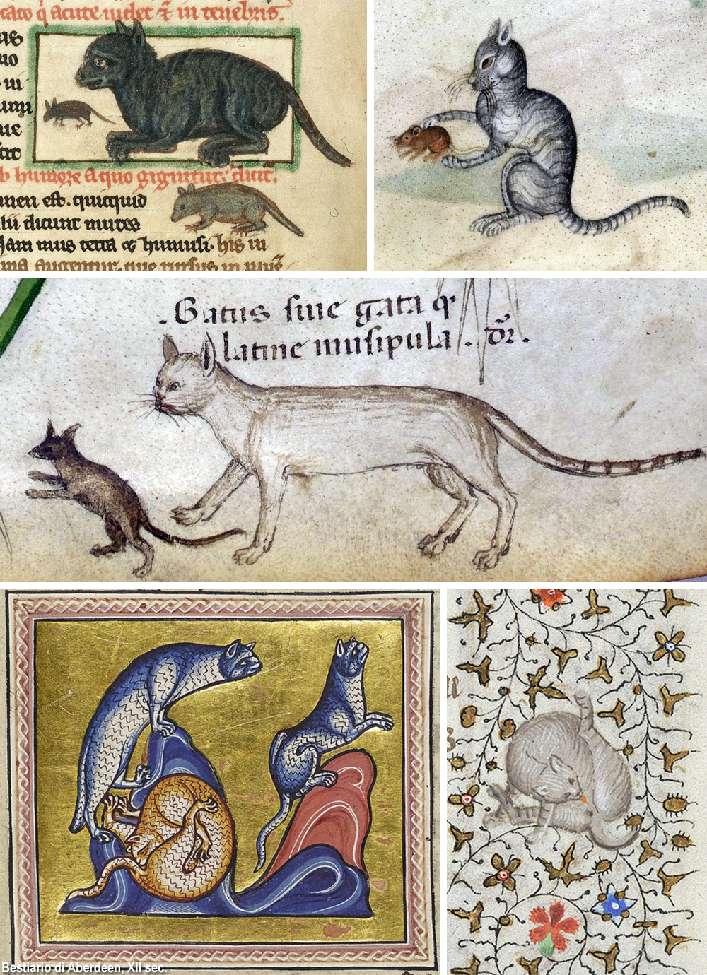 gatti nel Medioevo