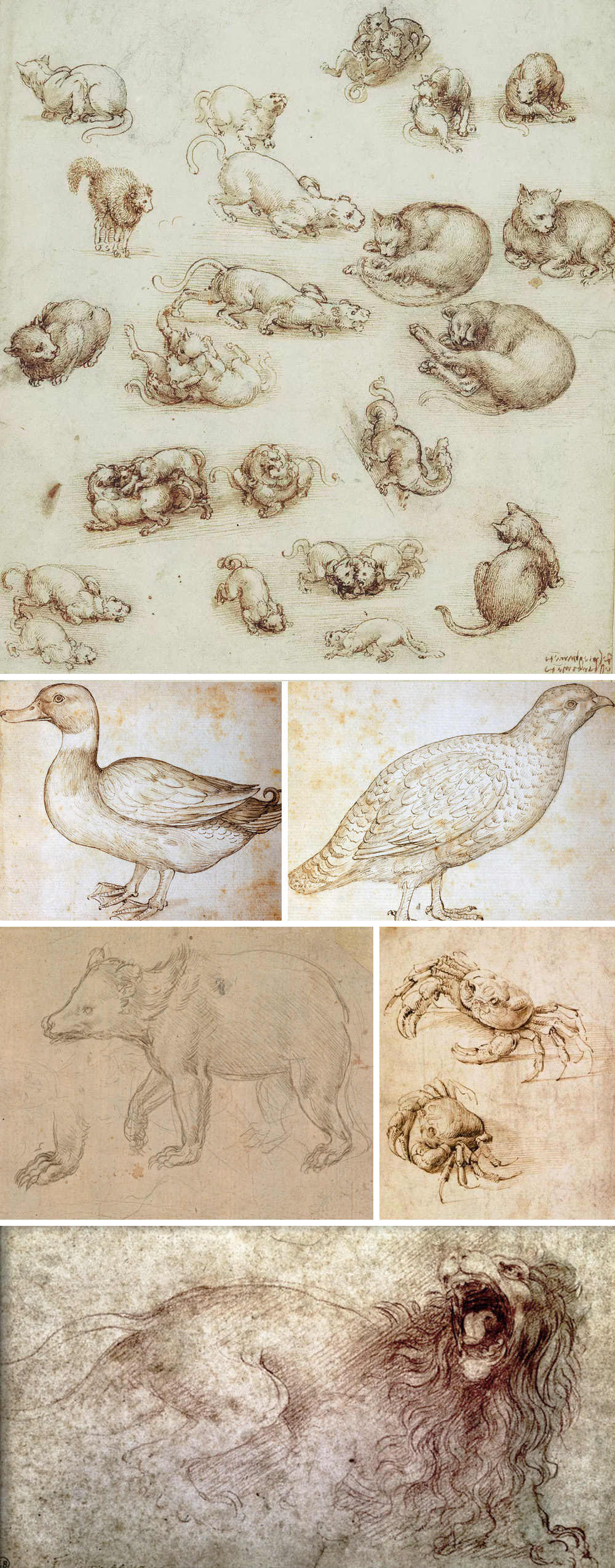 animali di Leonardo