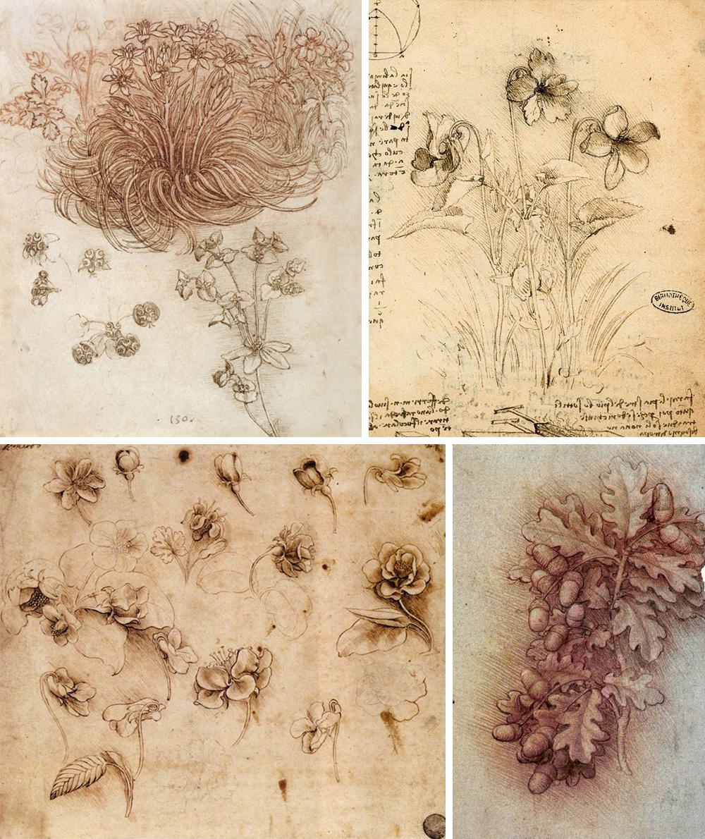 piante e fiori di Leonardo