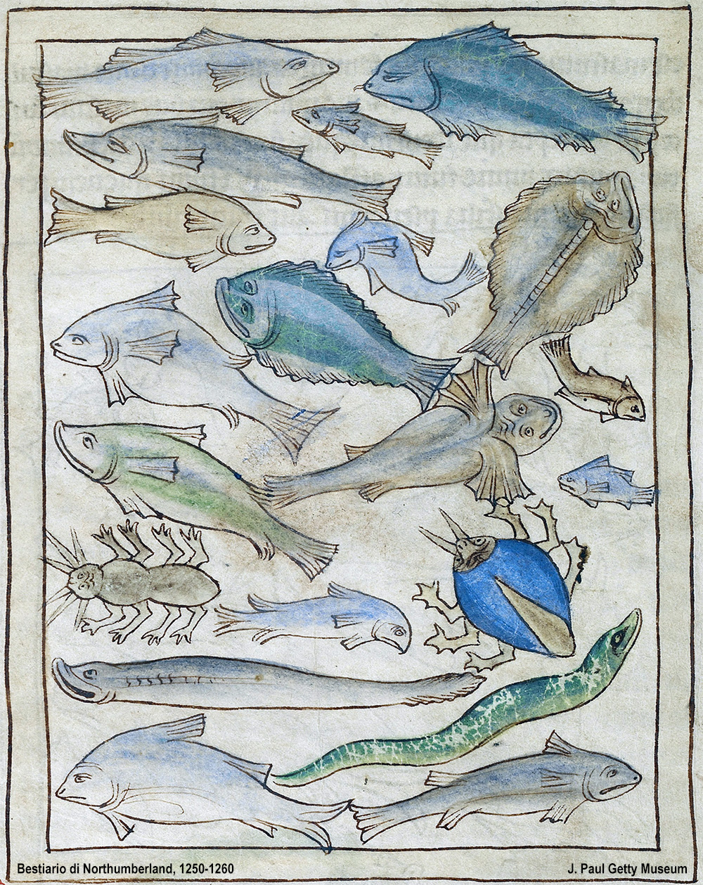 pesce medievale