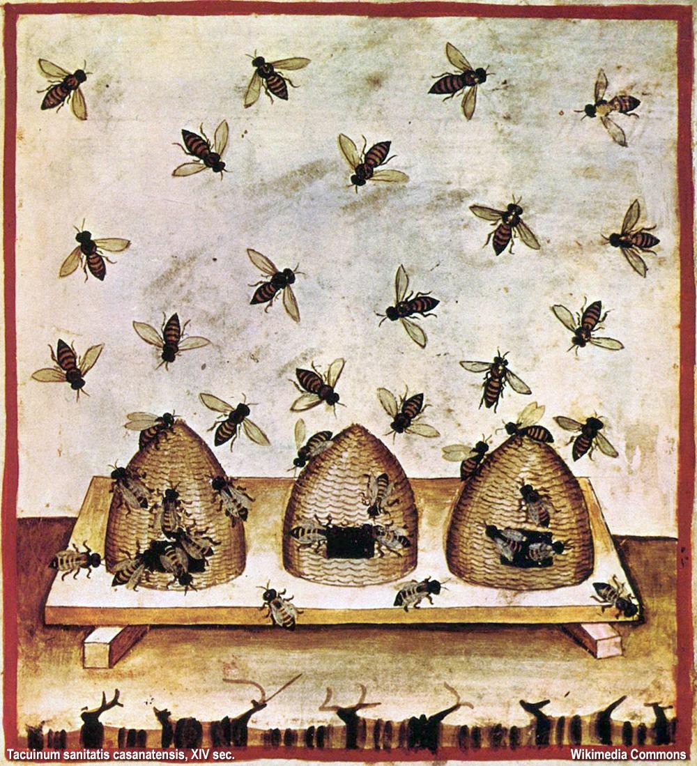 api di un tacuinum