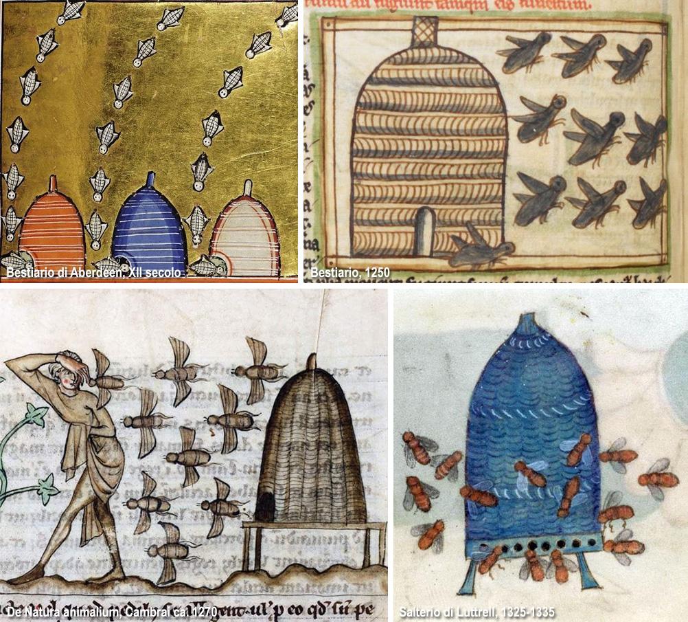api nei manoscritti